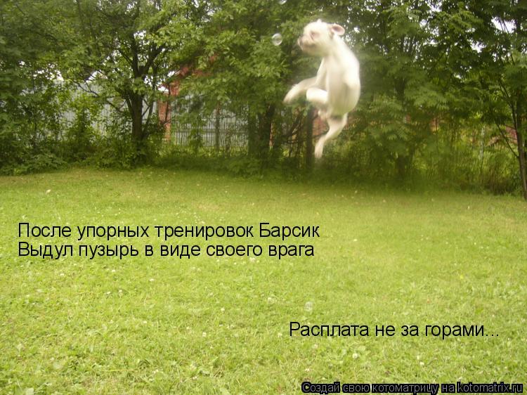Котоматрица: После упорных тренировок Барсик  Выдул пузырь в виде своего врага Расплата не за горами...