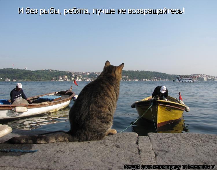Котоматрица: И без рыбы, ребята, лучше не возвращайтесь! И без рыбы, ребята, лучше не возвращайтесь!