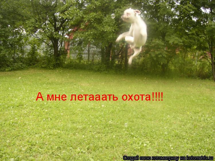 Котоматрица: А мне летааать охота!!!!