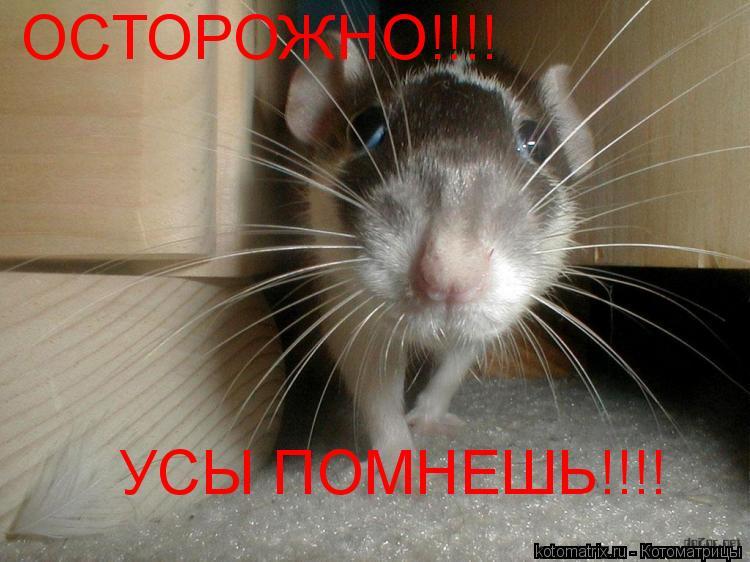 Котоматрица: УСЫ ПОМНЕШЬ!!!! ОСТОРОЖНО!!!!