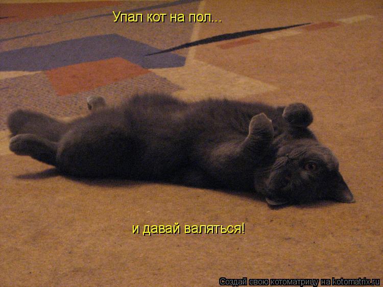 Котоматрица: Упал кот на пол... и давай валяться!