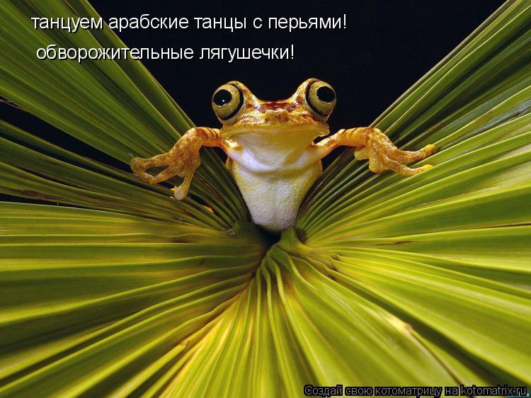 Котоматрица: танцуем арабские танцы с перьями! обворожительные лягушки! танцуем арабские танцы с перьями!  обворожительные лягушечки!