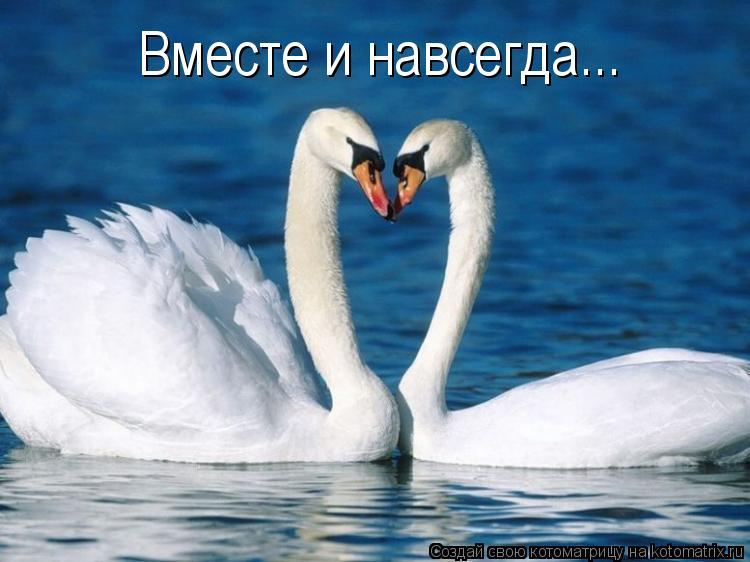 Котоматрица: Вместе и навсегда...