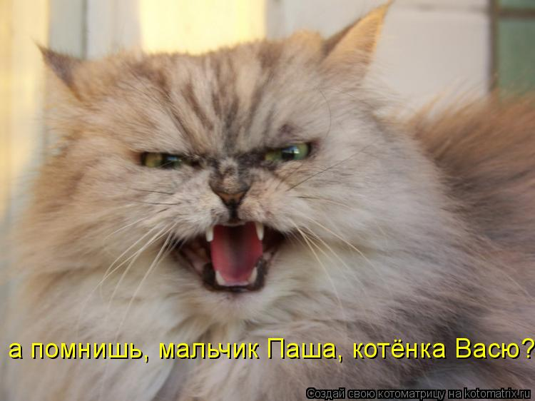 Котоматрица: а помнишь, мальчик Паша, котёнка Васю?