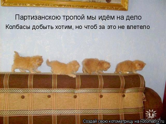 Котоматрица: Партизанскою тропой мы идём на дело Колбасы добыть хотим, но чтоб за это не влетело
