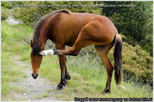 Котоматрица: Пока Илья Муромец ушел по нужне, конь богатырский продолжал нести дозор
