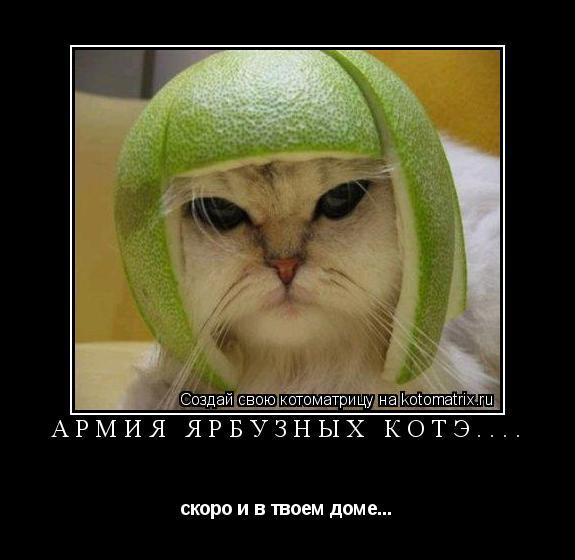 Котоматрица: Армия ярбузных котэ.... скоро и в твоем доме...