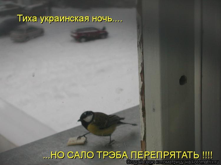 Котоматрица: Тиха украинская ночь.... ...НО САЛО ТРЭБА ПЕРЕПРЯТАТЬ !!!!