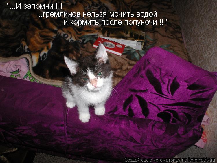 """Котоматрица: """"...И запомни !!! ..гремлинов нельзя мочить водой   и кормить после полуночи !!!"""""""
