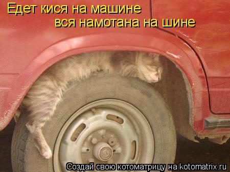 Котоматрица: Едет кися на машине вся намотана на шине