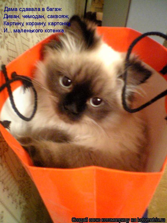 Котоматрица: Дама сдавала в багаж Диван, чемодан, саквояж, Картину, корзину, картонку, И... маленького котенка.