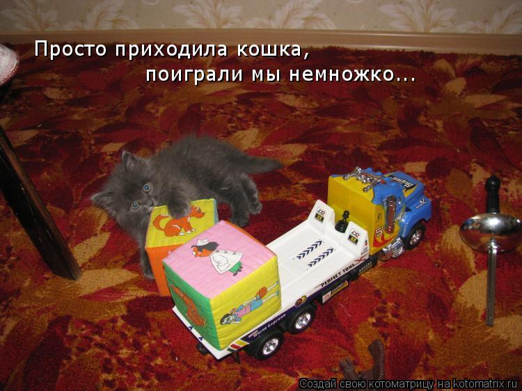 Котоматрица: Просто приходила кошка, поиграли мы немножко...