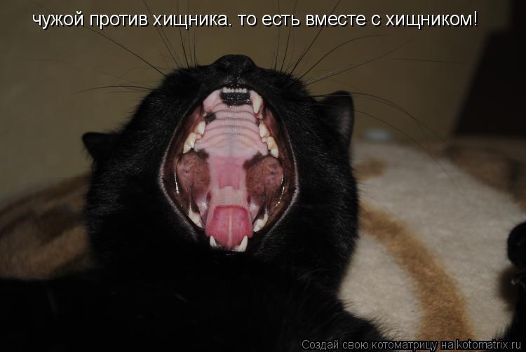 Котоматрица: чужой против хищника. то есть вместе с хищником!