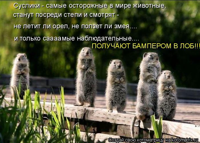 Котоматрица: Суслики - самые осторожные в мире животные.  станут посреди степи и смотрят -  не летит ли орел, не ползет ли змея.... и только саааамые наблюда