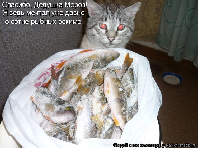 Котоматрица: о сотне рыбных эскт о сотне рыбных эскимо. Спасибо, Дедушка Мороз! Я ведь мечтал уже давно