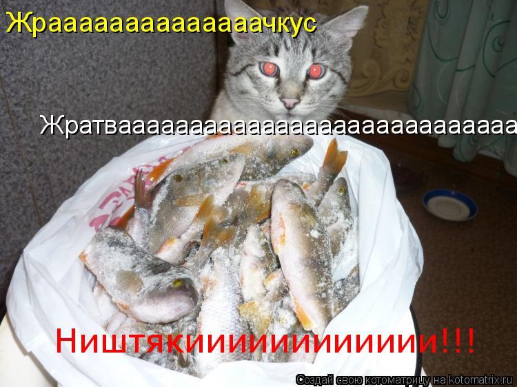 Котоматрица: Жратвааааааааааааааааааааааааааааааа Жраааааааааааааачкус Ништякииииииииииии!!!