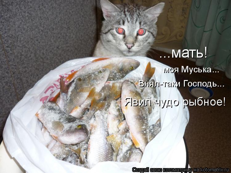 Котоматрица: ...мать! моя Муська... Внял-таки Господь... Явил чудо рыбное!