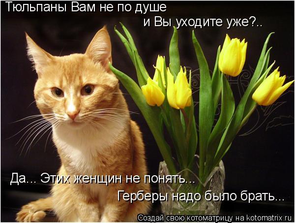 Котоматрица: Тюльпаны Вам не по душе и Вы уходите уже?.. Да... Этих женщин не понять... Герберы надо было брать...