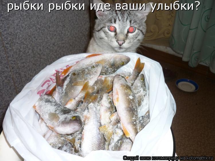 Котоматрица: рыбки рыбки иде ваши улыбки?