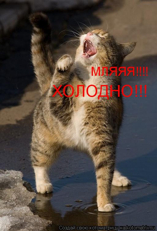 Котоматрица: ХОЛОДНО!!! МЛЯЯЯ!!!!