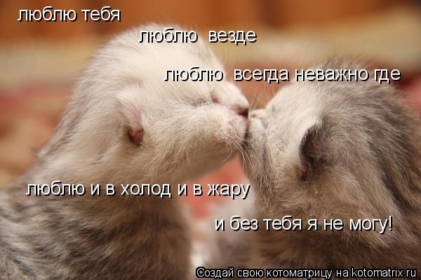 Котоматрица: люблю тебя люблю  везде люблю  всегда неважно где люблю и в холод и в жару и без тебя я не могу!