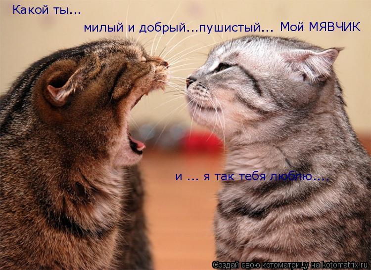 Котоматрица: Какой ты... милый и добрый...пушистый... и ... я так тебя люблю.... Мой МЯВЧИК