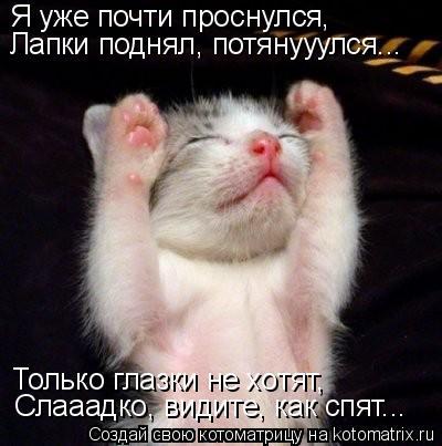 Котоматрица: Я уже почти проснулся, Лапки поднял, потянууулся... Только глазки не хотят, Слааадко, видите, как спят...