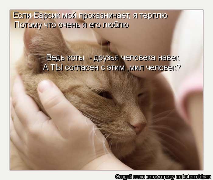 Котоматрица: Если Барсик мой проказничает, я терплю Потому что очень я его люблю Ведь коты  - друзья человека навек А ТЫ согласен с этим ,мил человек?
