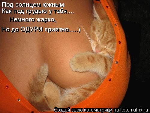 Котоматрица: Под солнцем южным Как под грудью у тебя.... Немного жарко,  Но до ОДУРИ приятно.....)