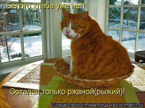 Котоматрица: Белого хлеба уже нет! Остался только ржаной(рыжий)!