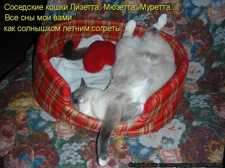 Котоматрица: Соседские кошки Лизетта, Мюзетта, Муретта... Все сны мои вами, как солнышком летним согреты...