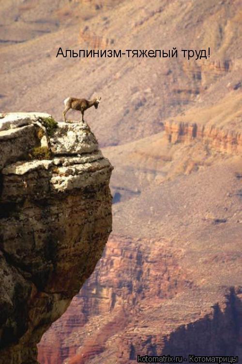 Котоматрица: Альпинизм-тяжелый труд!