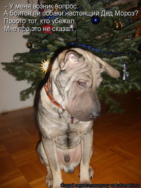 Котоматрица: - У меня возник вопрос. А боится ли собаки настоящий Дед Мороз? Просто тот, кто убежал, Мне про это не сказал...