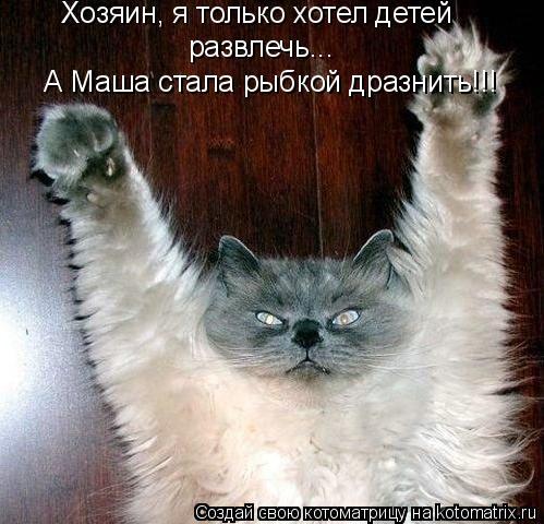 Котоматрица: Хозяин, я только хотел детей  развлечь... А Маша стала рыбкой дразнить!!!