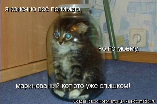 Котоматрица: я конечно всё понимаю,  но по моему,  маринованый кот это уже слишком!