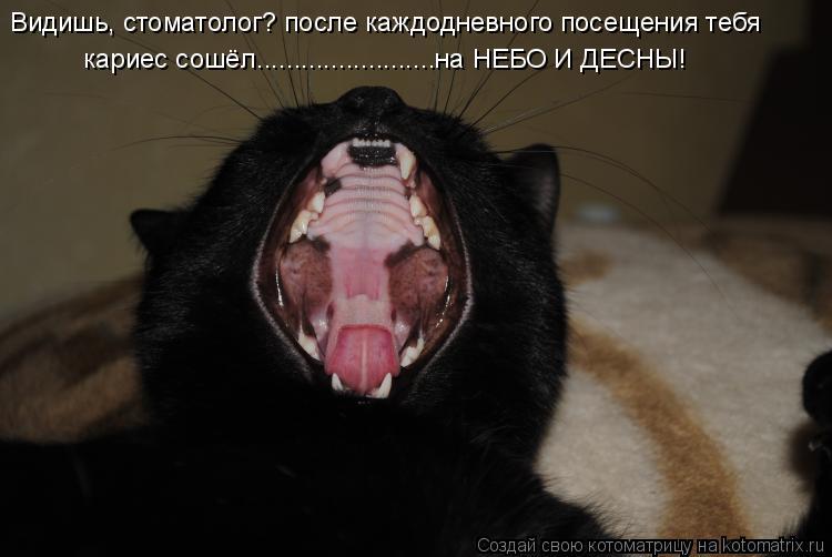 Котоматрица: Видишь, стоматолог? после каждодневного посещения тебя кариес сошёл........................на НЕБО И ДЕСНЫ!
