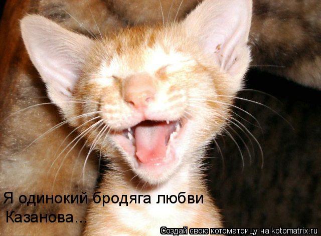 Котоматрица: Я одинокий бродяга любви Казанова...