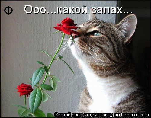 Котоматрица: Ооо...какой запах...