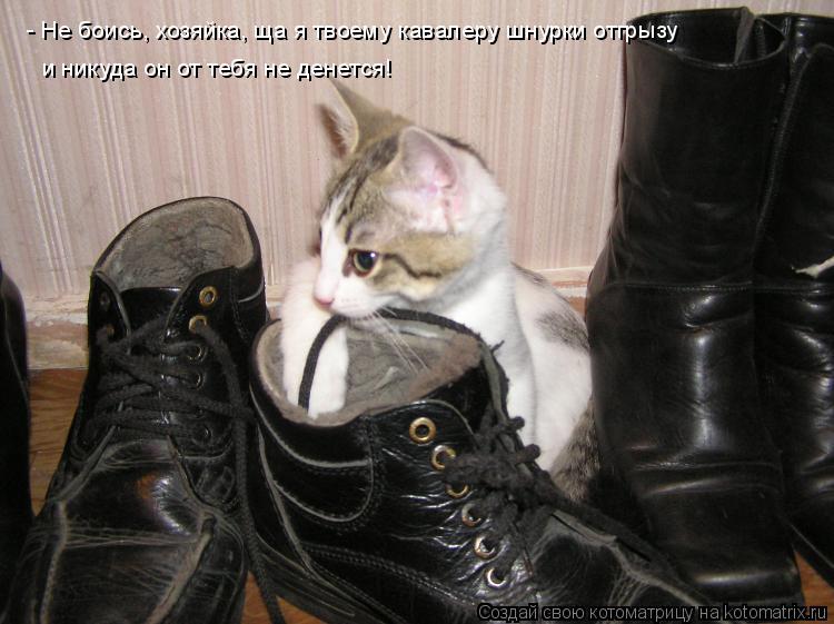 Котоматрица: - Не боись, хозяйка, ща я твоему кавалеру шнурки отгрызу и никуда он от тебя не денется!