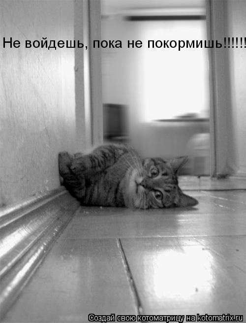 Котоматрица: Не войдешь, пока не покормишь!!!!!!!!