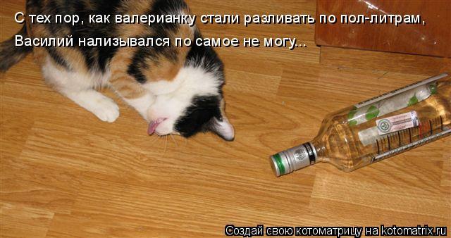 Котоматрица: С тех пор, как валерианку стали разливать по пол-литрам, Василий нализывался по самое не могу...