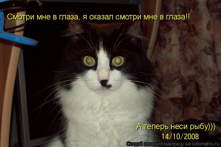 Котоматрица: Смотри мне в глаза, я сказал смотри мне в глаза!! А теперь неси рыбу)))