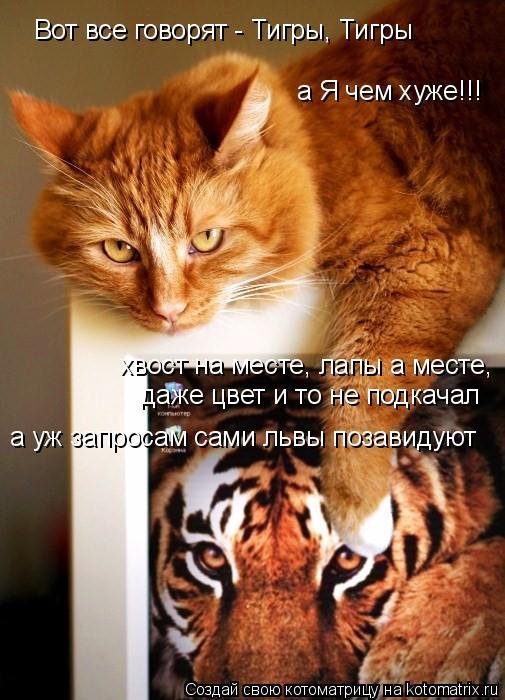 Котоматрица: Вот все говорят - Тигры, Тигры а Я чем хуже!!! хвост на месте, лапы а месте, даже цвет и то не подкачал а уж запросам сами львы позавидуют
