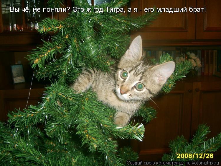 Котоматрица: Вы чё, не поняли? Это ж год Тигра, а я - его младший брат!