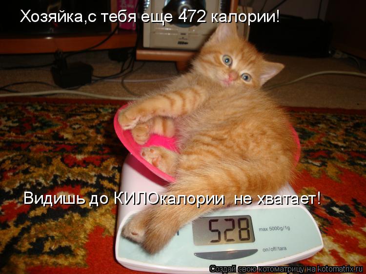 Котоматрица: Хозяйка,с тебя еще 472 калории! Видишь до КИЛОкалории  не хватает!
