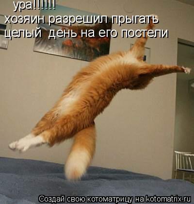 Котоматрица: ура!!!!!! хозяин разрешил прыгать целый  день на его постели
