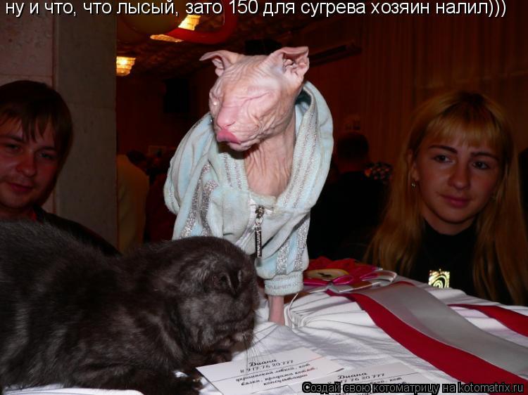 Котоматрица: ну и что, что лысый, зато 150 для сугрева хозяин налил)))