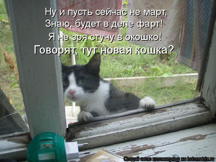 Котоматрица: Ну и пусть сейчас не март, Знаю, будет в деле фарт! Я не зря стучу в окошко! Говорят, тут новая кошка?