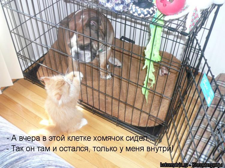 Котоматрица: - А вчера в этой клетке хомячок сидел... - Так он там и остался, только у меня внутри!