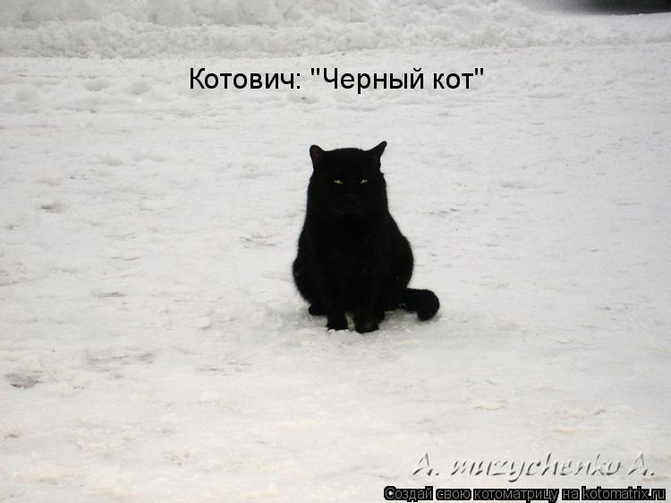 """Котоматрица: Котович: """"Черный кот"""""""